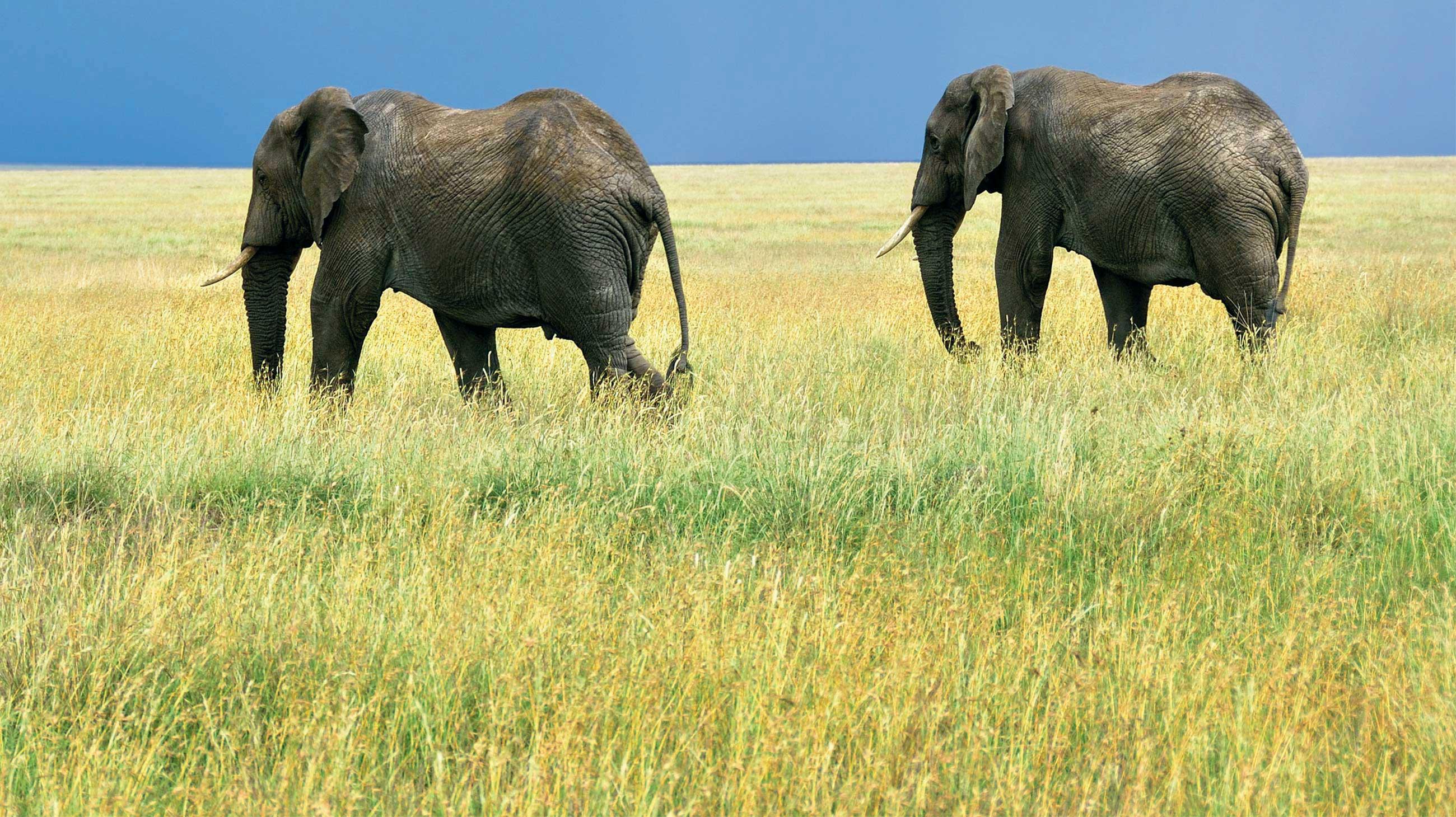 Photo Voyage Elephant
