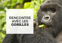 congo rencontre avec les gorilles